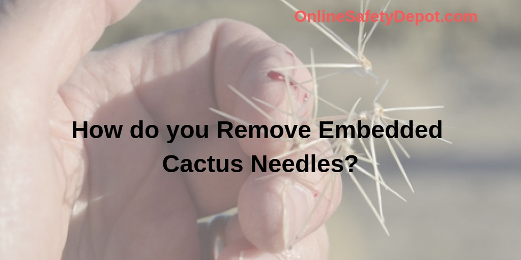 How do you Remove Embedded Cactus Needles?