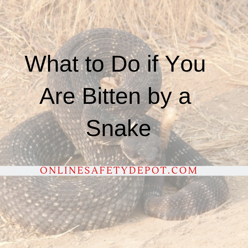 What to Do if You Are Bitten by a Snake